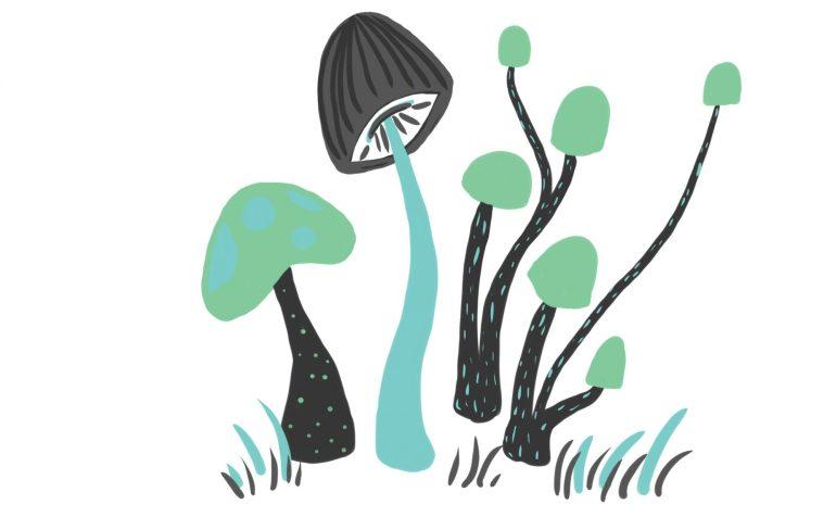 cropped-mushroom-regular1.jpg