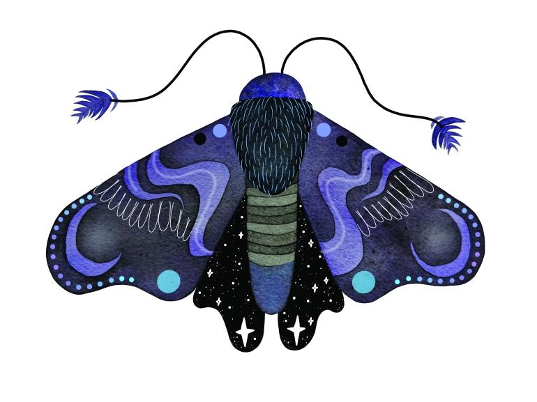 moth final
